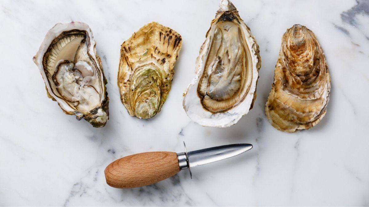 Best Oyster Shucking Knives